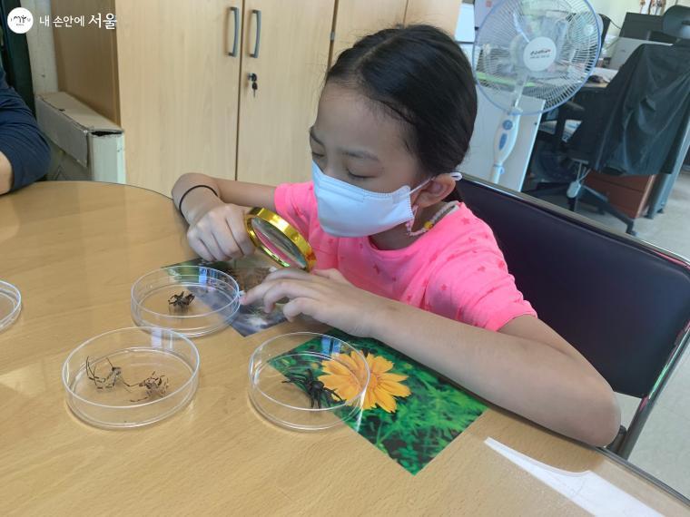 아이가 여러 종류의 거미를 관찰하고 있다.