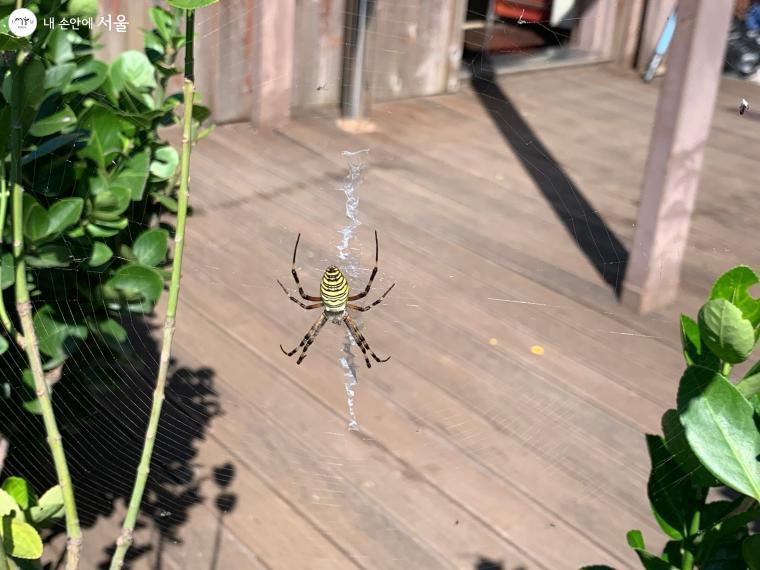 거미와 거미줄에 대한 모든 것을 배울 수 있는 기회다.
